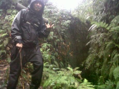 hutan jayagiri