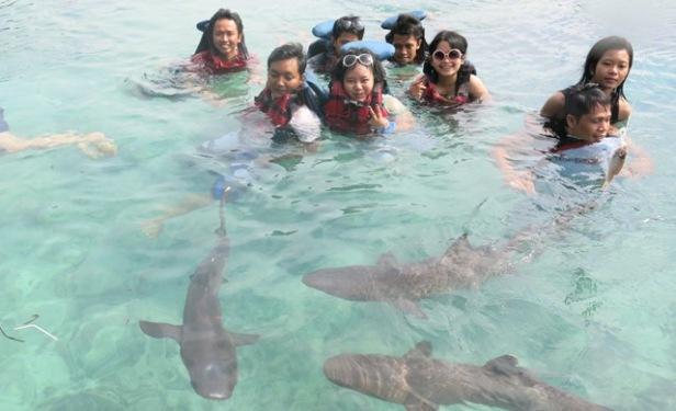 penangkaran hiu